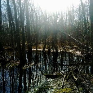 Swamp 2014-05-10