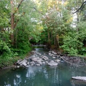 Bilberry Creek -- David Kitz