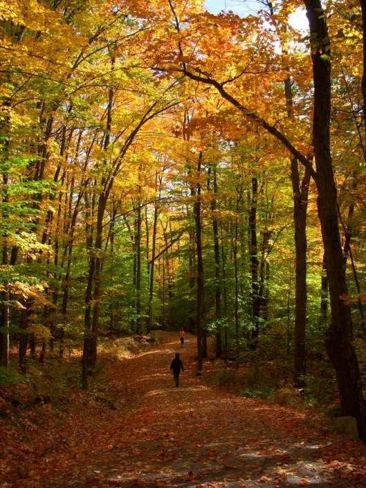 Gatineau Park Trail 2012