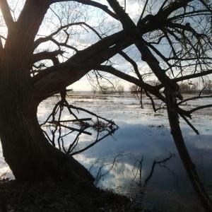Swamp tree2015-05-02