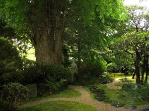 A Tree flourishing in the house of God -- David Kitz