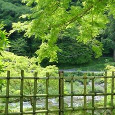 Bamboo Fence, Aichi-ken, Japan -- David Kitz