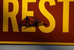 Be at Rest -- David Kitz