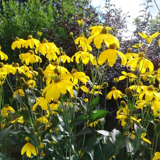 Yellow Cones 2015-08-26