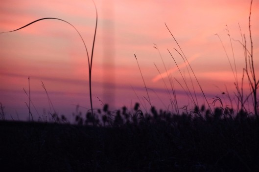 D Adam Sunset Grass 2