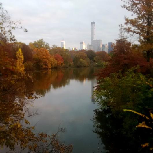 Central Park 2014-11-11