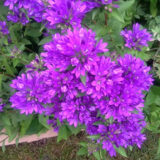 Purple 2016-06-29
