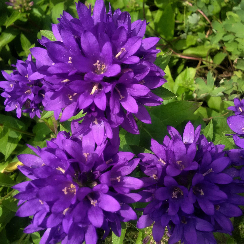 2017-06-28 purple stars