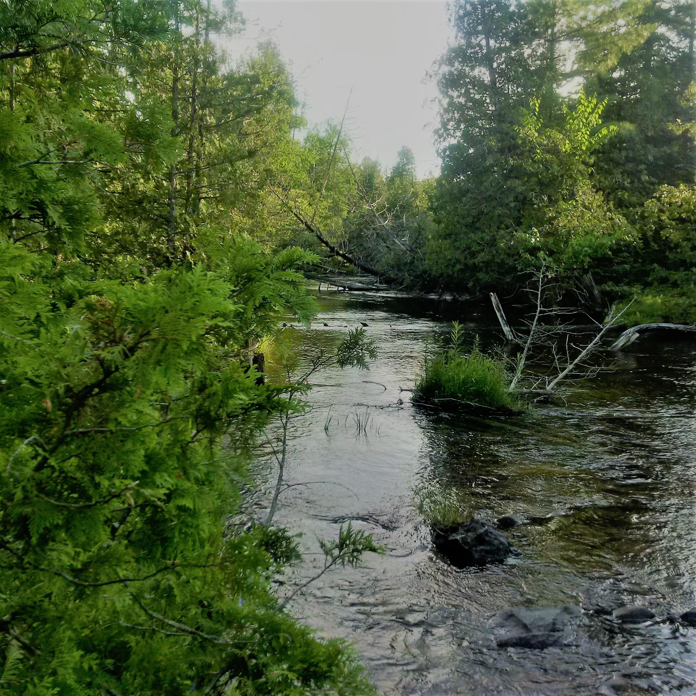 2017-06-24 Bell Creek