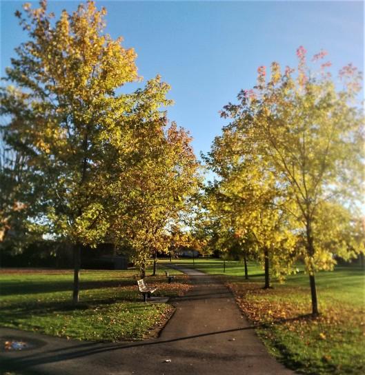 GN Park Path 2014-10-27 (2)