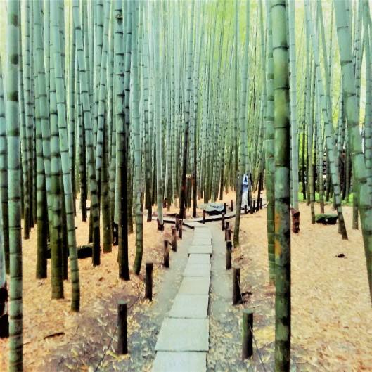 Bamboo 1 2015-05-19 (3)