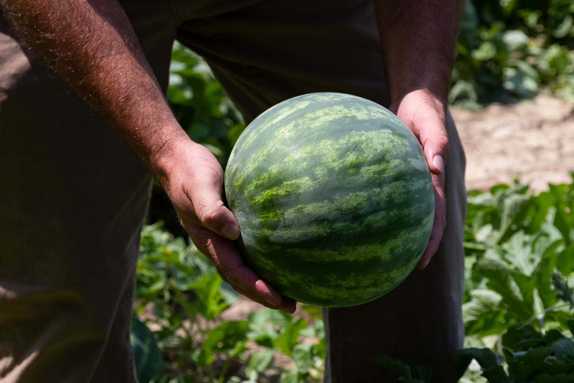 close up photo of person holding green watermelon fruit