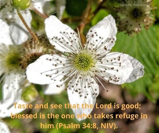 Psalm 34-8 (2)