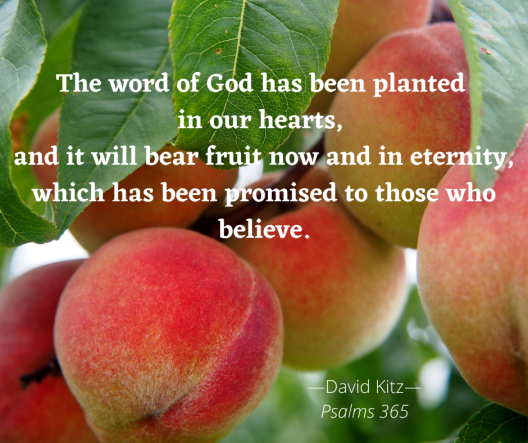 bear fruit now and in eternity 365 Psalm 104