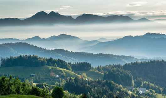 mountainous valley with evergreen forest against misty sky